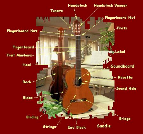 Classical guitar anatomy