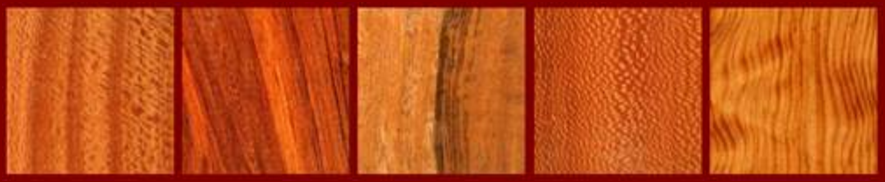 Lacey She Oak, Curly Lagerstroemia, E.Ind. Laurel, Brazilian Leopard Wood, Fig. Long Leaf Pine for the Classical Guitar